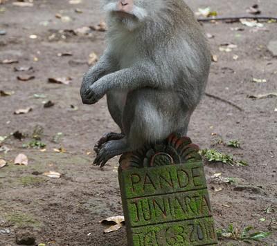 Monkeys-From-Monkey-Forest-L[1]
